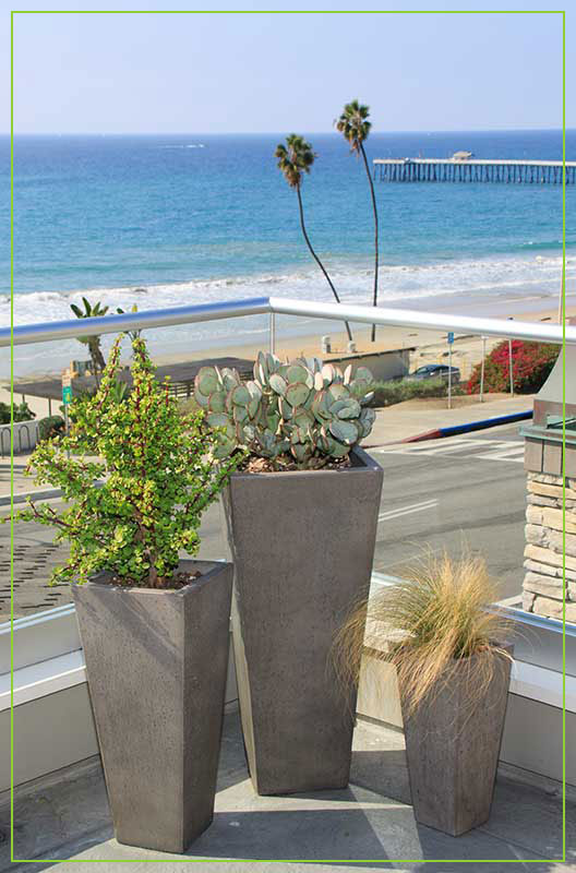 Patioscaping-Succulent-Plants-in-Pots