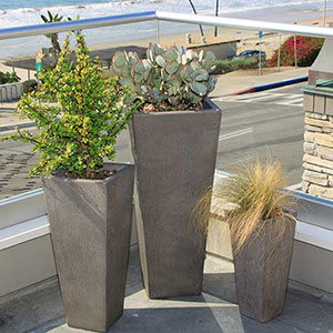 Patioscaping Succulent Plants in Pots