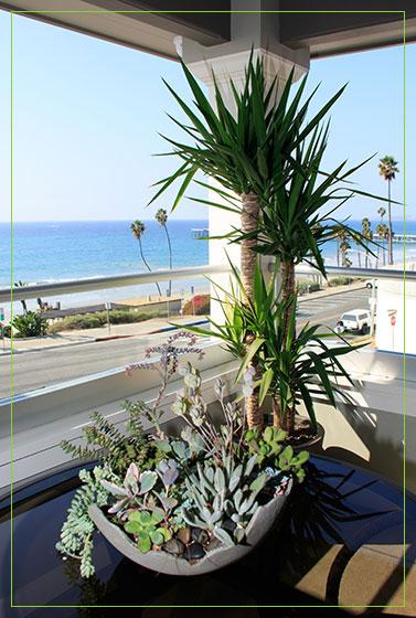 yucca-plant-succulent-bowl-2