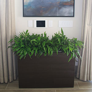 Ferns In Trough